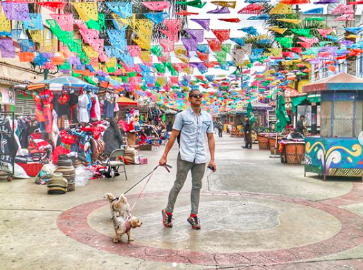 Roadtrip through Pet-Friendly Rosarito & Tijuana, Mexico