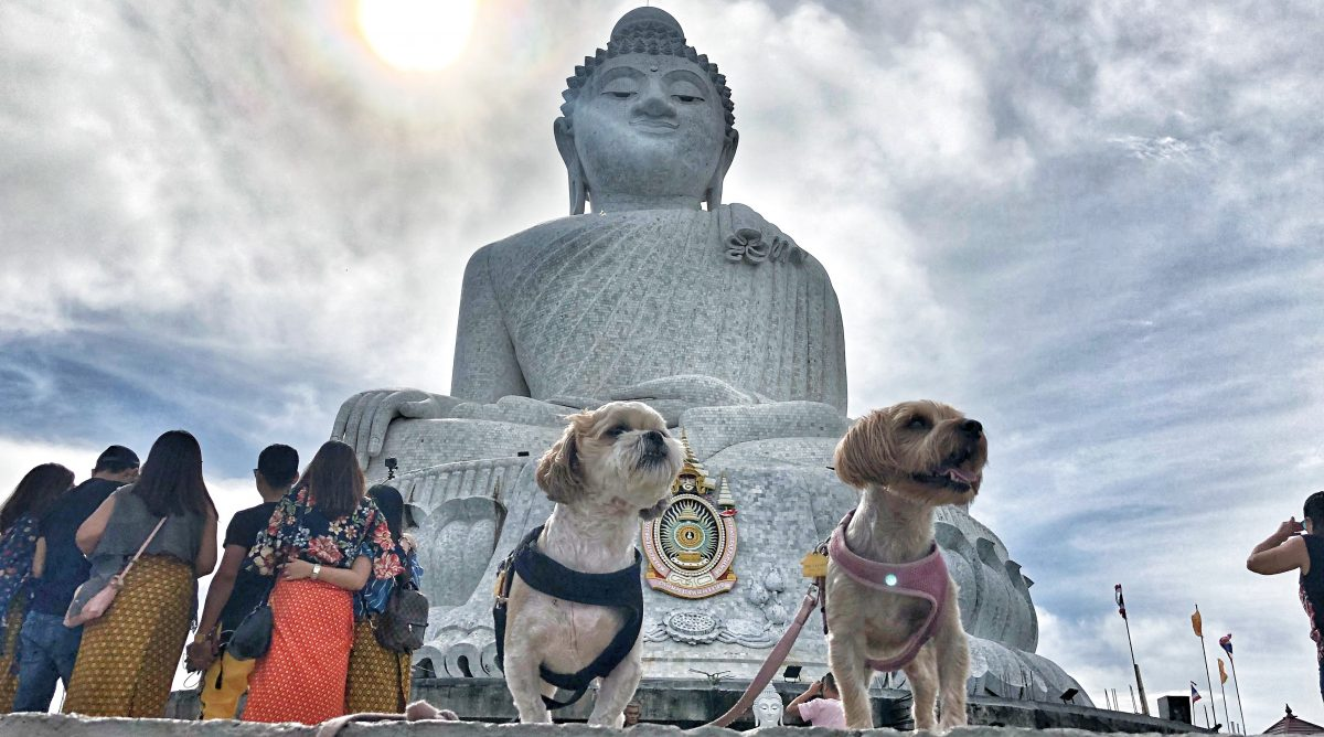 Is Thailand Dog-Friendly?