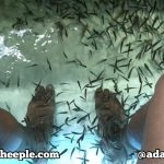 fish spa pedicure thailand garra ruffa