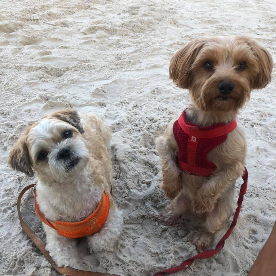 BeFreeMySheeple Hua Hin Beach Raindrop and Flex