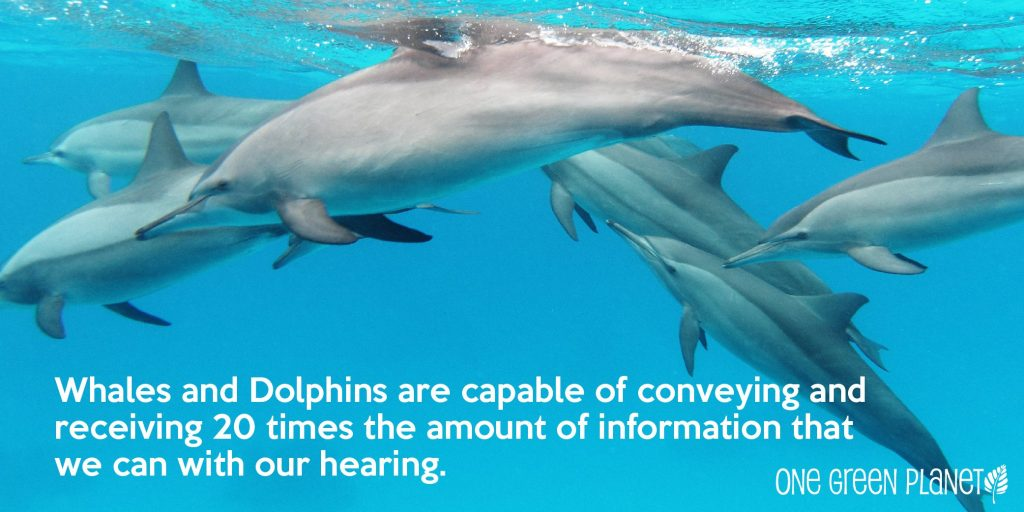 BeFreeMySheeple Dolphin Hearing