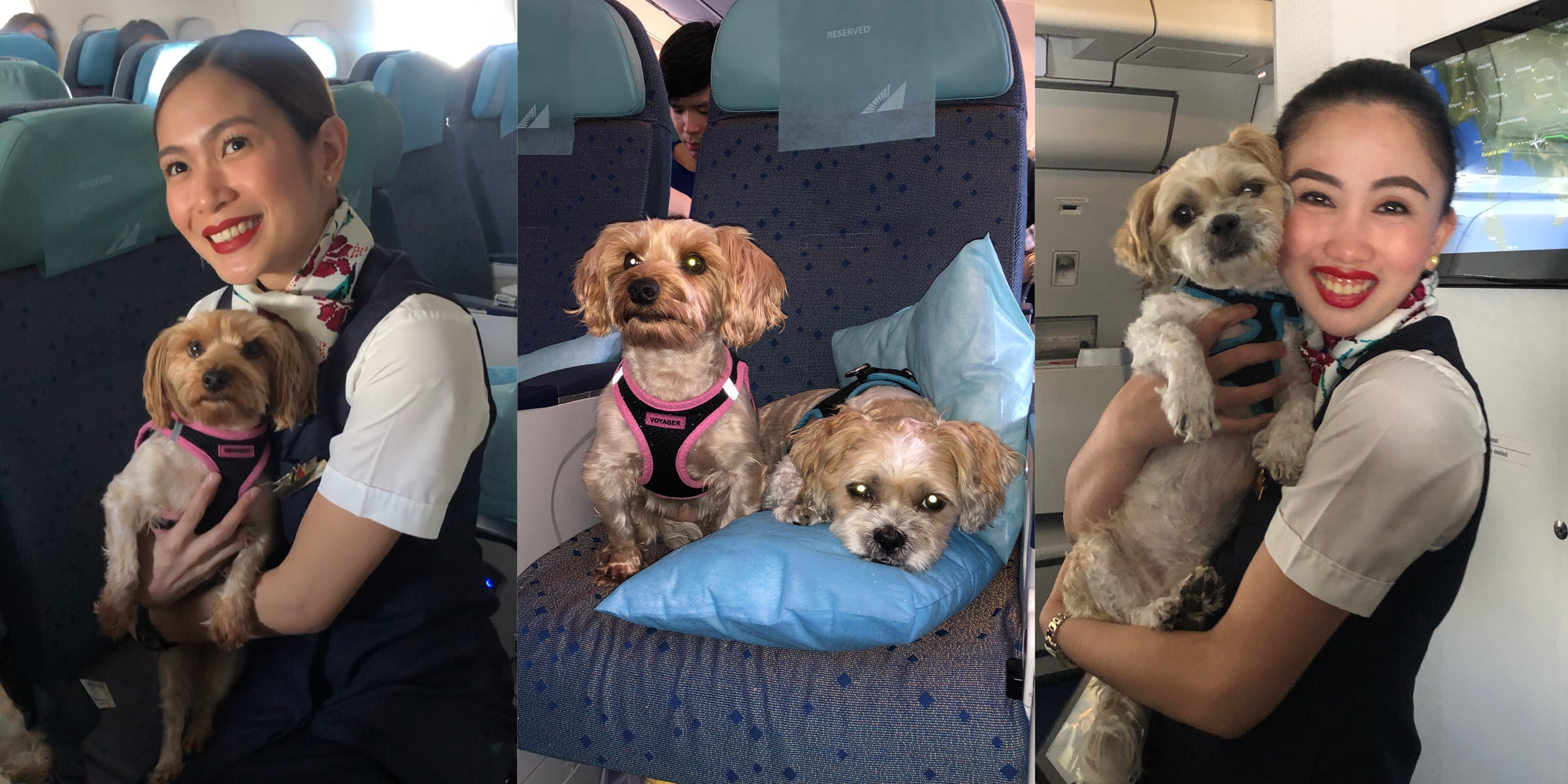 Philippine Airlines Review (Traveling with My Dogs)