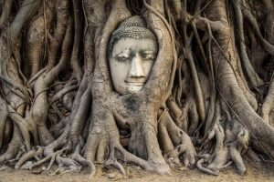 Buddha Head in Banyan Tree