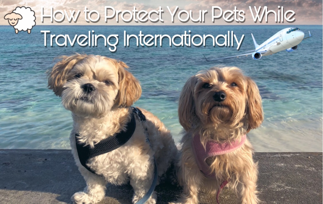 How To Protect Your Pets While Traveling With Them Internationally
