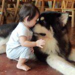 Big Dog Cafe