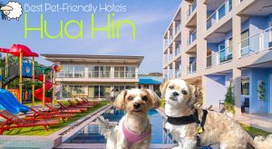 Best Pet-Friendly Hotels in Hua Hin