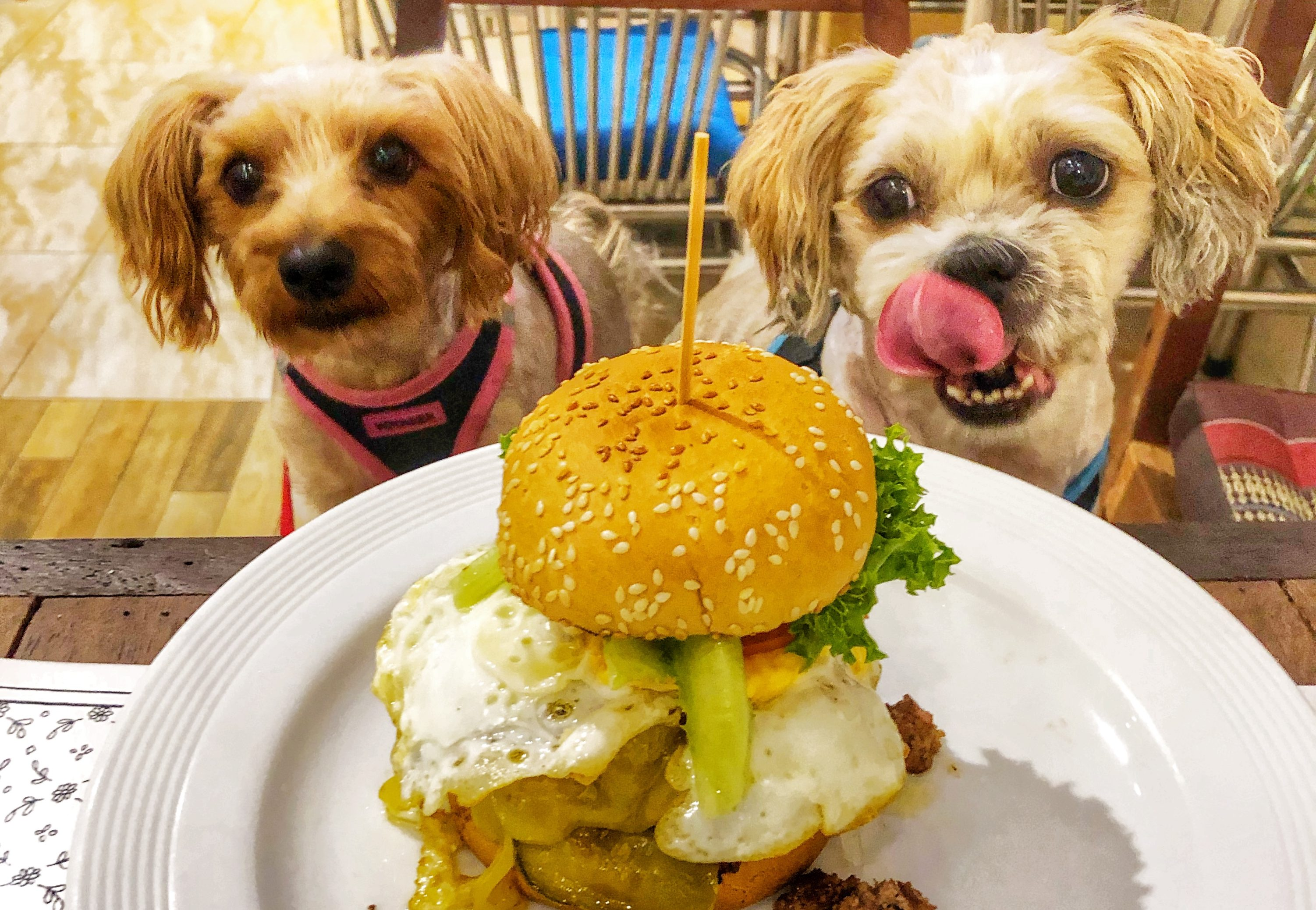 Dog-Friendly Indoor Air-Conditioned Restaurants in Bangkok