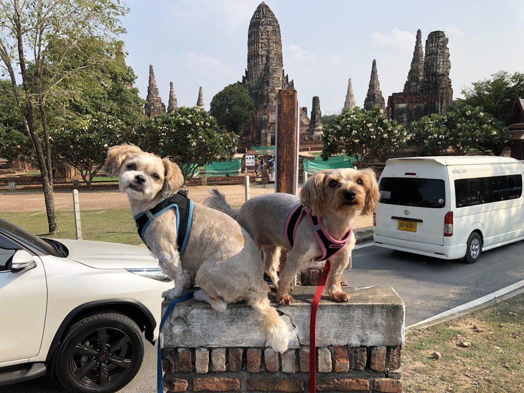 Raindrop and Flex in Ayutthaya