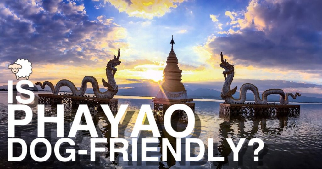 Is Phayao Dog-Friendly?
