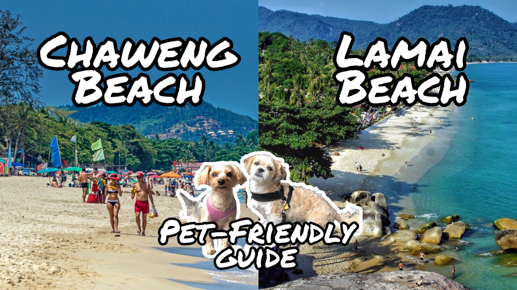 Koh Samui Pet-Friendly Guide (Hotels For Under 1,000 baht/night!)