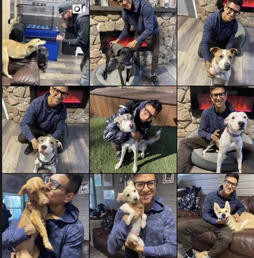 Single Man Spends Valentine's Day With Rescue Dogs In Need Of Homes