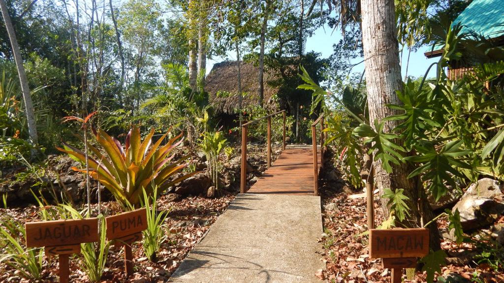 Mariposa Jungle Lodge jungle