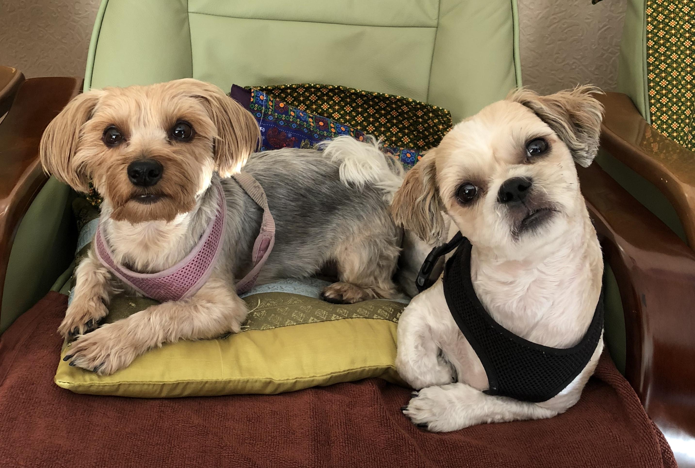 BeFreeMySheeple Pet Friendly Hotels Bangkok Raindrop and Flex